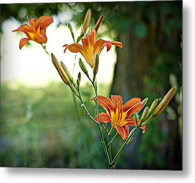 Bloom Where You're Planted Metal Print by Cricket Hackmann