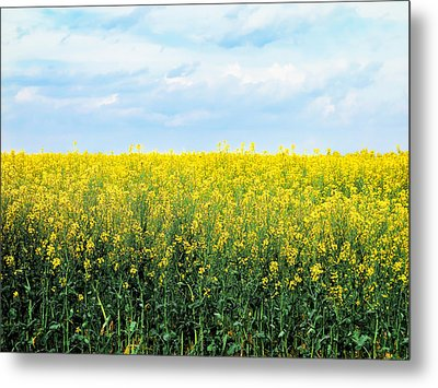 Blooming Canola - Photography Metal Print by Ann Powell