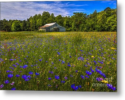 Blooming Country Meadow Metal Print