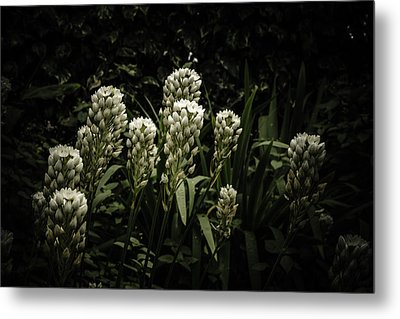 Metal Print featuring the photograph Blooming In The Shadows by Marco Oliveira