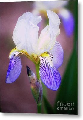 Blooming Iris Metal Print by Shawn Bamberg