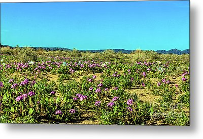 Metal Print featuring the photograph Blooming Sand Verbena by Robert Bales