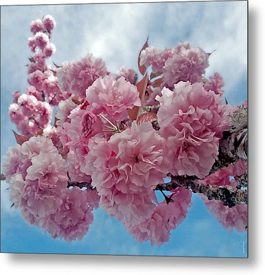 Blossom Bliss Metal Print by Gwyn Newcombe