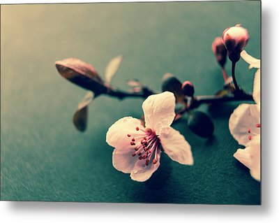 Blossom Metal Print by Caitlyn Grasso