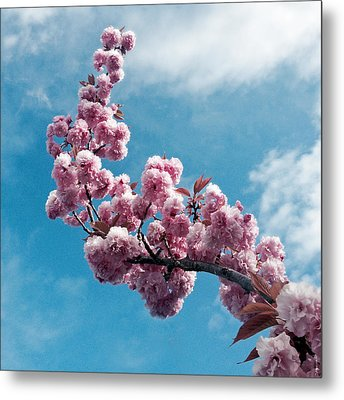 Metal Print featuring the photograph Blossom Impressions by Gwyn Newcombe