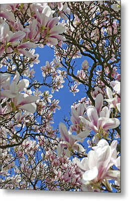 Blossom Magnolia White Spring Flowers Photography Metal Print by Artecco Fine Art Photography