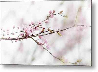 Metal Print featuring the photograph Blossom Pink by Rebecca Cozart