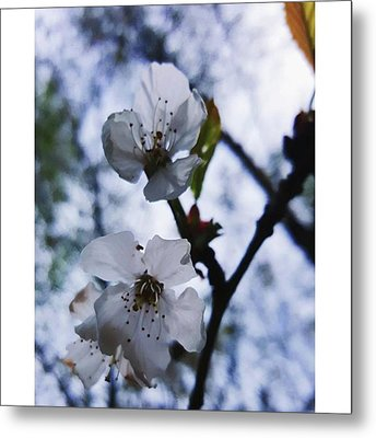 #blossom #spring #macro #flower #pretty Metal Print by Natalie Anne