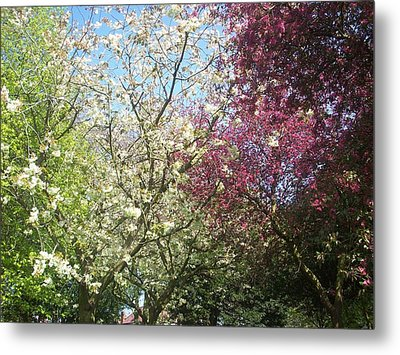 Metal Print featuring the painting Blossom Trio by Judith Desrosiers