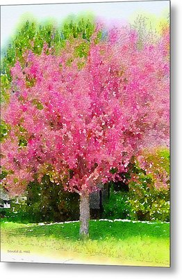 Blossoming Crabapple Tree Metal Print by Donald S Hall