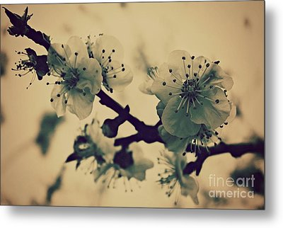 Blossoms At Dusk Metal Print by Clare Bevan
