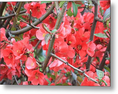 Blossoms Branches And Thorns Metal Print by Carol Groenen