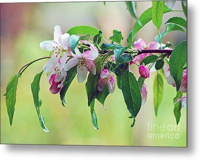 Metal Print featuring the photograph Blossoms In Spring by Lila Fisher-Wenzel