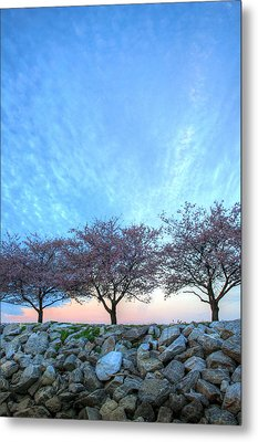 Blossoms Metal Print by JC Findley