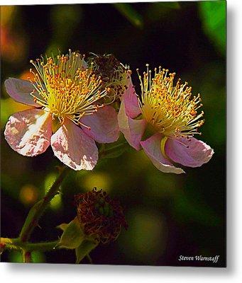 Blossoms.1 Metal Print