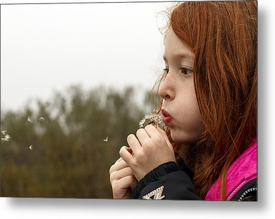 Blowing Dandelions Metal Print