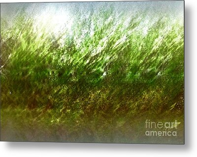 Metal Print featuring the photograph Blowing In The Wind by John Krakora