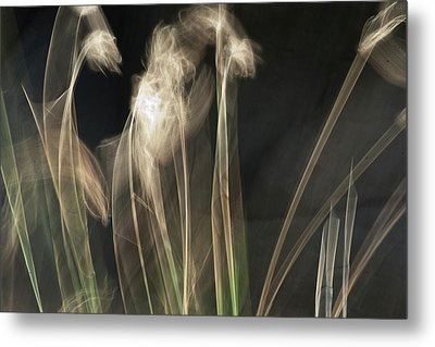 Metal Print featuring the photograph Blowing In The Wind by Roger Mullenhour
