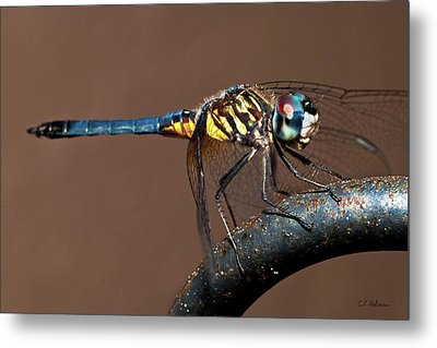 Blue And Gold Dragonfly Metal Print