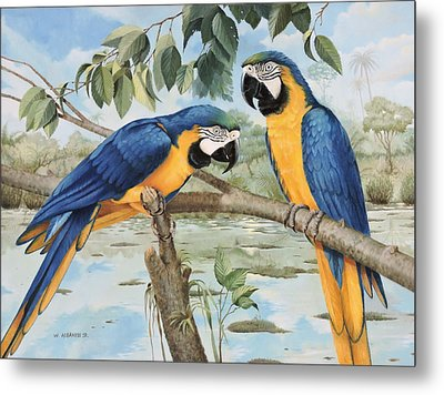 Metal Print featuring the painting Blue And Gold Macaws by William Albanese Sr