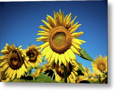 Blue And Gold Metal Print by Sandy Molinaro