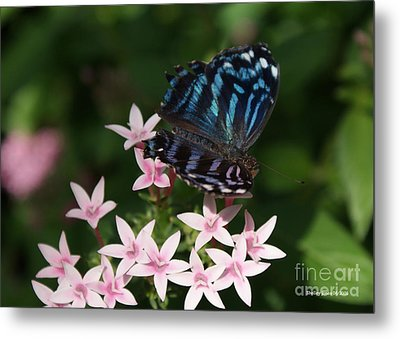 Blue And Pink Make Lilac Metal Print