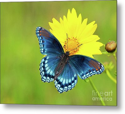 Blue And Yellow On Green Metal Print