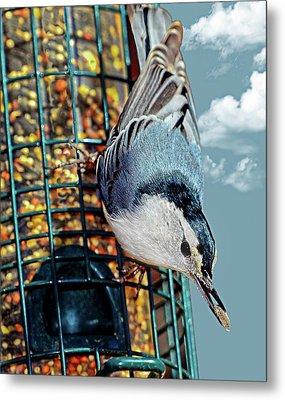 Blue Bird On Feeder Metal Print by Susan Leggett