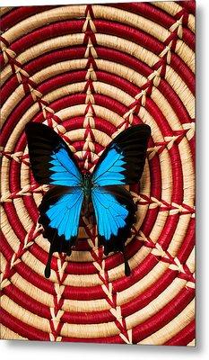 Blue Black Butterfly In Basket Metal Print by Garry Gay
