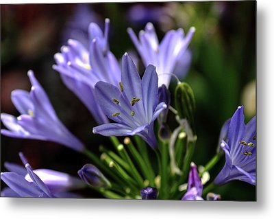 Metal Print featuring the photograph Blue Blossoms by Richard Stephen