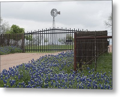 Blue Bonnets By Gate Metal Print