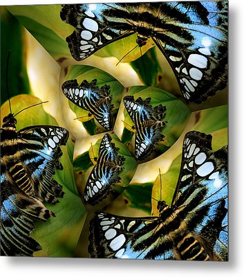 Blue Butterfly Collage Metal Print by Irma BACKELANT GALLERIES