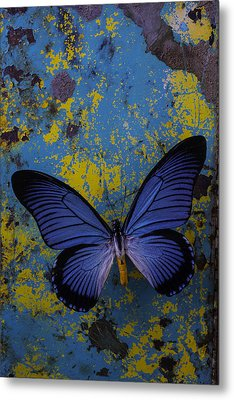 Blue Butterfly On Rusty Wall Metal Print by Garry Gay