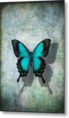 Blue Butterfly Resting Metal Print by Garry Gay
