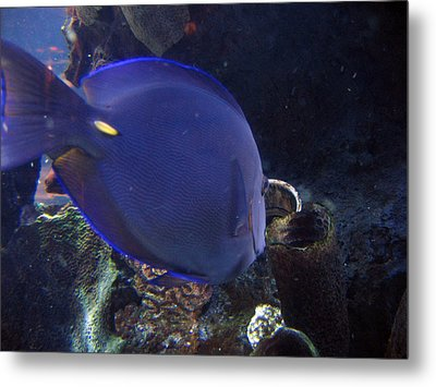 Blue Color Fish Metal Print by Suhas Tavkar