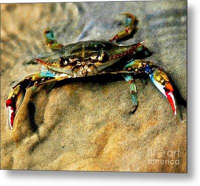 Blue Crab Metal Print by Joan McCool