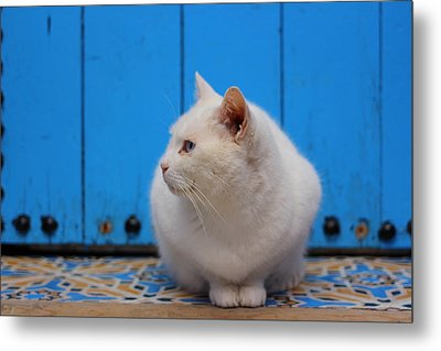 Metal Print featuring the photograph Blue Door White Cat by Ramona Johnston