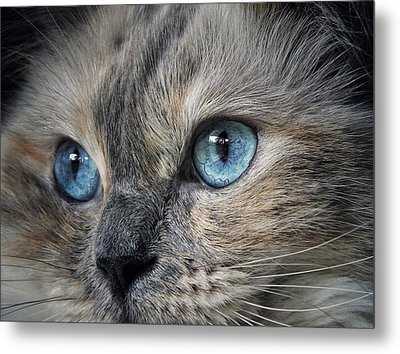 Blue Eyed Girl Metal Print by Karen Stahlros