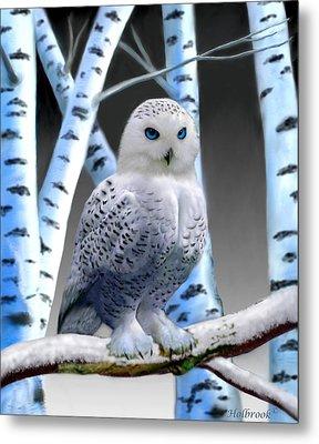 Blue-eyed Snow Owl Metal Print by Glenn Holbrook
