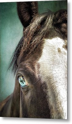 Metal Print featuring the photograph Blue Eyes by Debby Herold