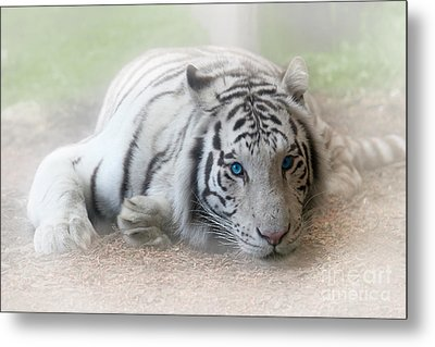 Blue Eyes Metal Print by Jeannie Burleson