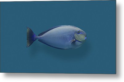 Blue Round Nose Fish Metal Print by Daniel Furon