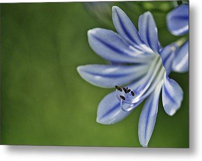 Blue Flower Metal Print by Nailia Schwarz