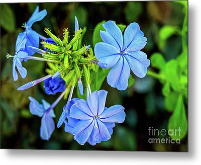 Blue For You Metal Print