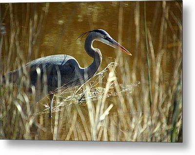 Blue Heron In The Grasses Metal Print by Rosanne Jordan
