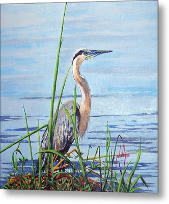 Metal Print featuring the painting Blue Heron by Jim Phillips