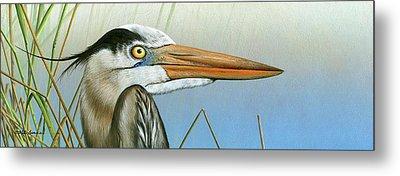 Blue Heron  Metal Print by Mike Brown
