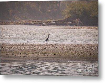 Blue Heron On The Yellowstone Metal Print