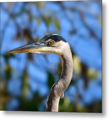 Blue Heron Profile Metal Print by Kathy Eickenberg