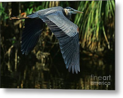 Metal Print featuring the photograph Blue Heron Series The Pond by Deborah Benoit